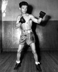 Small Montana boxer