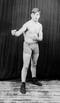 Knockout Brown boxer