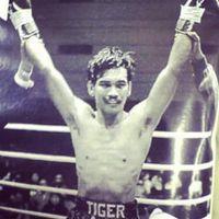 Tiger Ari boxer