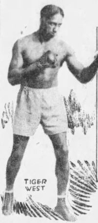 Indian Tiger West boxer